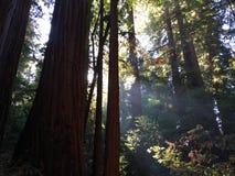 Rayos ligeros en el bosque Imágenes de archivo libres de regalías