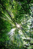 Rayos solares Fotos de archivo libres de regalías