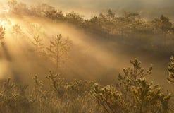 Rayos solares brumosos en bosque imágenes de archivo libres de regalías