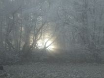 Rayos solares débiles que brillan a través de la niebla en bosque fotografía de archivo