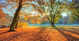 Rayos solares de la mañana en último bosque del otoño fotos de archivo libres de regalías