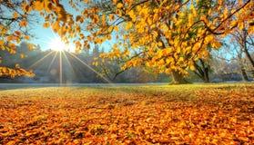 Rayos solares de la mañana en último bosque del otoño imágenes de archivo libres de regalías
