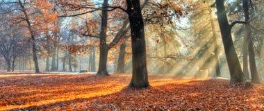 Rayos solares de la mañana en último bosque del otoño imagen de archivo libre de regalías