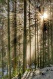 Rayos solares en el bosque Foto de archivo libre de regalías