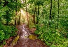 Rayos solares en el bosque imagen de archivo