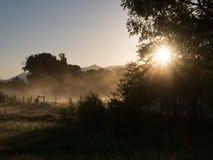 Rayos solares a través de la niebla y de un árbol de hoja caduca Imagenes de archivo