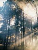 Rayos solares unilaterales a través del bosque foto de archivo libre de regalías