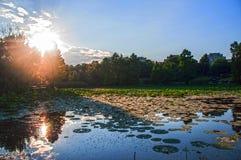 Rayos solares y lirio de agua Foto de archivo libre de regalías