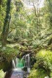Rayos a través de los árboles Foto de archivo libre de regalías