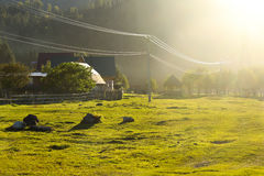 Rayos verdes del césped y del sol Fotos de archivo libres de regalías