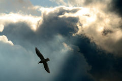 Rayos y nubes Fotografía de archivo libre de regalías