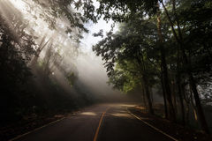 Rays against Forest curve road stock photography