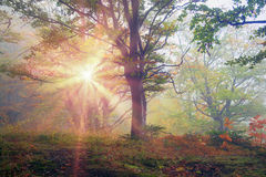 Rays in the Carpathian forest Royalty Free Stock Image