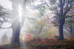 Rays in the Carpathian forest Stock Photo