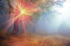Rays in the Carpathian forest Stock Images