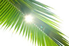 Rays caught through the palm leaf Royalty Free Stock Images