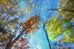 The Rays of Fall Royalty Free Stock Photography