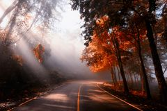 Rays falling through autumn forest and mist. Rays light scenic landscape of sunlight falling through mist, forest, and curved downhill local street with autumn stock photography