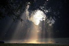 Rays of Light. Beams of morning sun shining through some trees Royalty Free Stock Photography