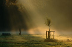 Rays of Light. On a little tree in the morning Stock Photos