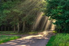 Rays of light. Sun rays on a street through a forest Royalty Free Stock Photo