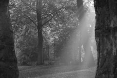 Rays of Light. In the early morning sunlight and in a wooded area Royalty Free Stock Images