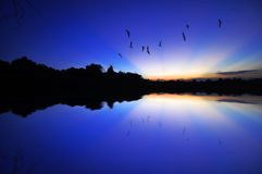 Rays of the light with flying birds Stock Photos