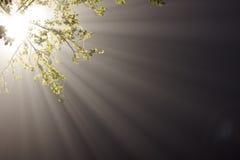 Rays of light in fog Stock Image