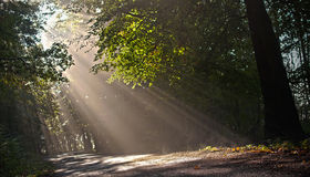 Rays of light. In the forest Stock Image