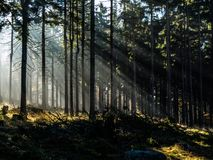 Rays of light. In forest (Czech Republic Royalty Free Stock Images