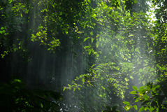 Rays of light in a jungle Royalty Free Stock Images