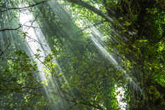 Rays of light in a jungle Stock Photography
