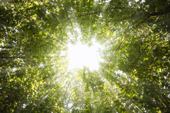 Rays of light through the leaves of the trees Royalty Free Stock Photo