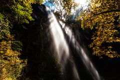 Rays of light protruding through high waterfall. Rays of light protruding through high waterfall and lush vegetation in rainforest stock image