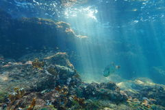 Rays of light underwater on a reef with fish. Rays of light underwater through the water surface viewed from the seabed on a reef with fish, Caribbean sea Royalty Free Stock Image