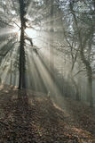 Rays of light in the wood Royalty Free Stock Photo