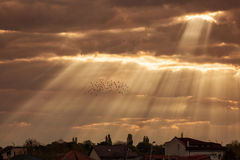 Rays of lights at sunrise with beautiful clouds and birds flying Royalty Free Stock Photography