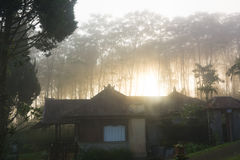 Rays of magic sunlight in the misty pine woods at sunrise Royalty Free Stock Photos