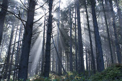 Rays in the mist Royalty Free Stock Photos