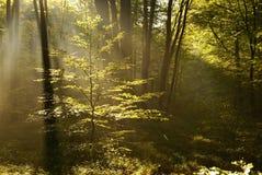 Rays of morning sun Royalty Free Stock Photo