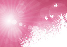 Rays pink with grass Stock Photography