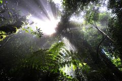 Rays in the rainforest Stock Photo