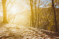 The rays of the rising sun and melts the first snow in the morning autumn forest Stock Images
