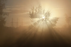 Rays of the rising sun Stock Images