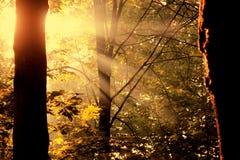 rays s-sunen Royaltyfria Bilder