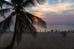 Silhouette of palm trees at sunset on the beach stock photos