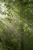 Rays shine through branches Royalty Free Stock Photos