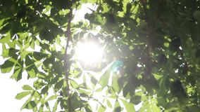 Rays of the summer sun shining through the green foliage of the trees. Rays of the summer sun, shining through the green foliage of trees. The wind shakes the stock video