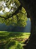 rays sun Στοκ φωτογραφίες με δικαίωμα ελεύθερης χρήσης