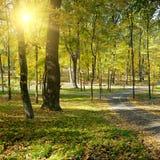 Rays sun in autumn park Royalty Free Stock Image